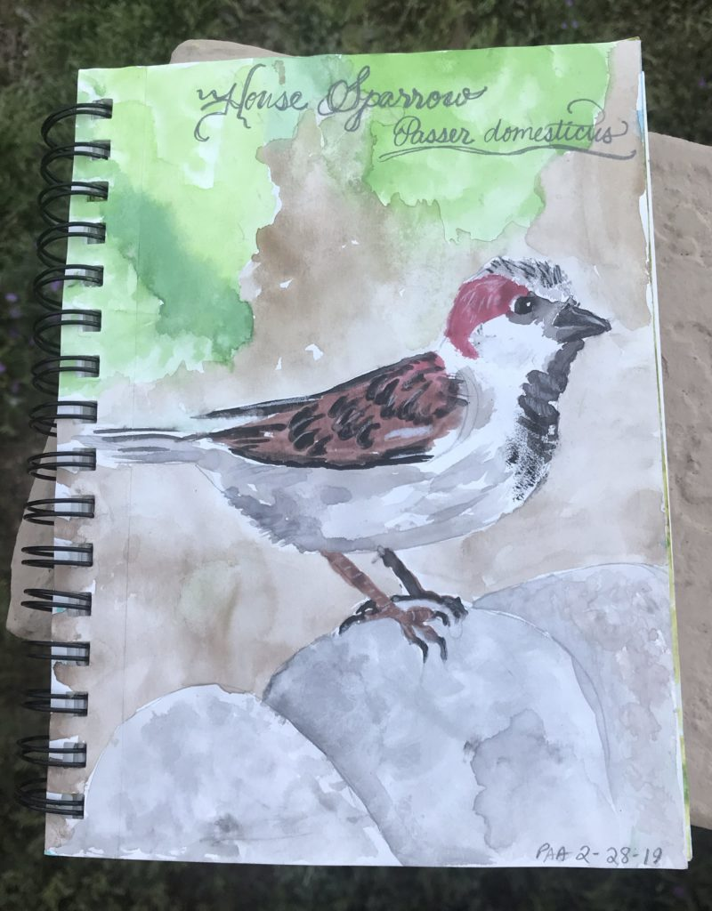 House Sparrow Nature Journal