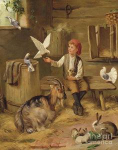 boy milking goats